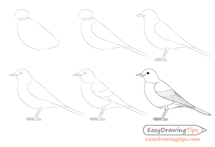 Bird step by step drawing