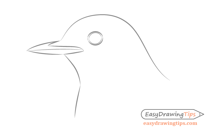 Bird head basic line drawing