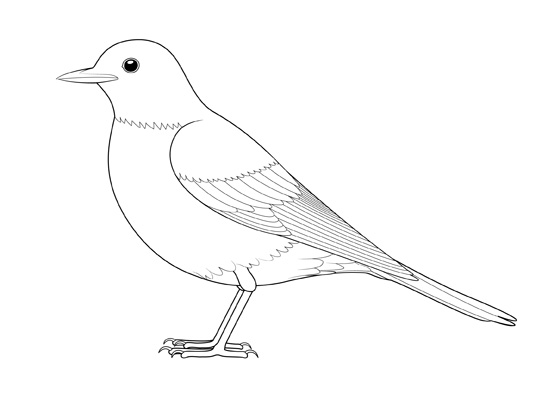 Bird side view drawing