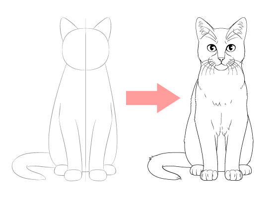 How To Draw A Cat Step By Step From Front View