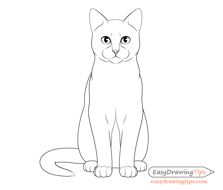 Cat sitting front view details drawing