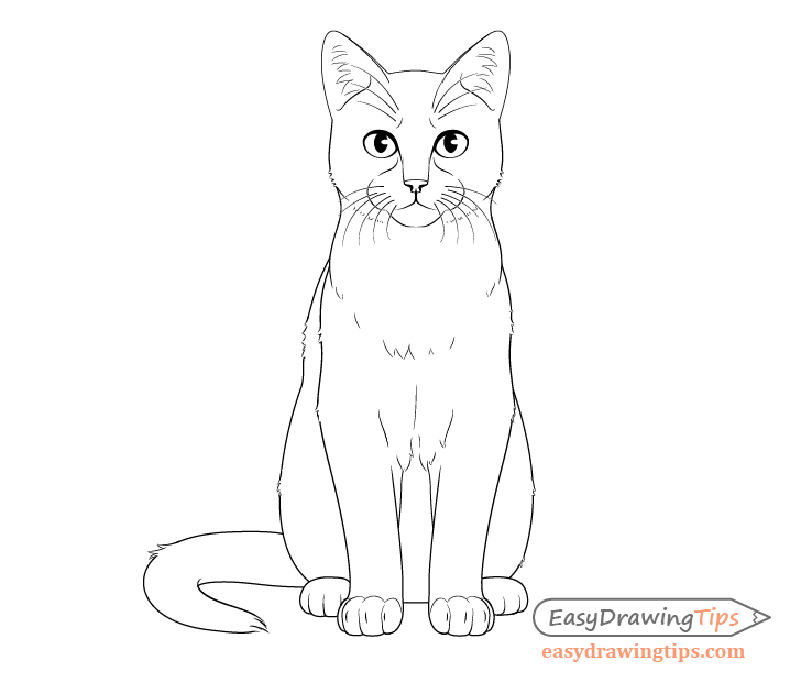 Cat sitting front view drawing