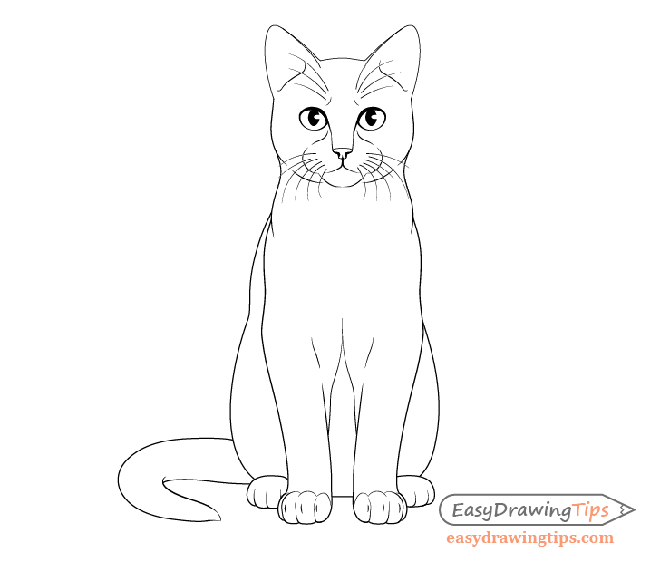 Cat sitting front view whiskers and claws drawing