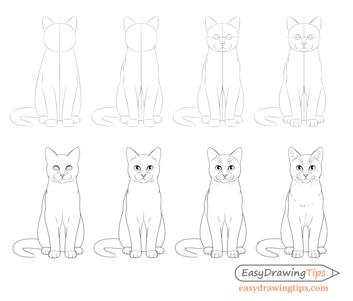 Sitting cat front view drawing step by step