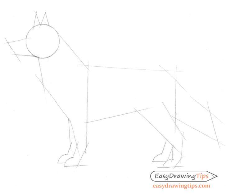 Dog drawing proportions sketch