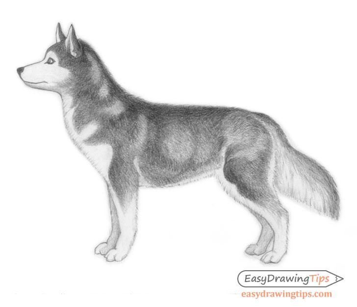 Shaded dog drawing