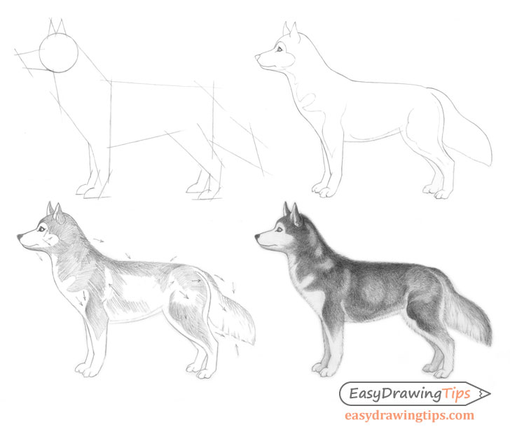 How To Draw A Dog Step By Step Easydrawingtips