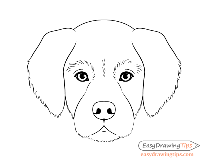 Line Drawing Of A Dog S Face : Dog head front view drawing step by easydrawingtips