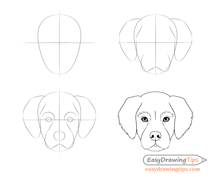 Dog head front view drawing step by step