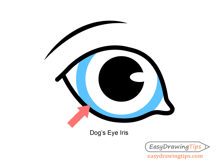 Dog eye pupil drawing