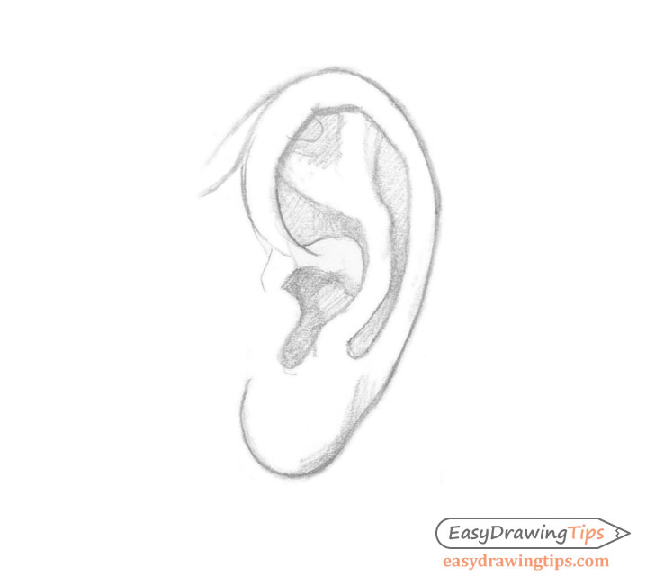 Ear side view basic shading