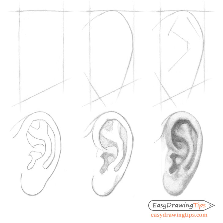 Ear side view step by step drawing