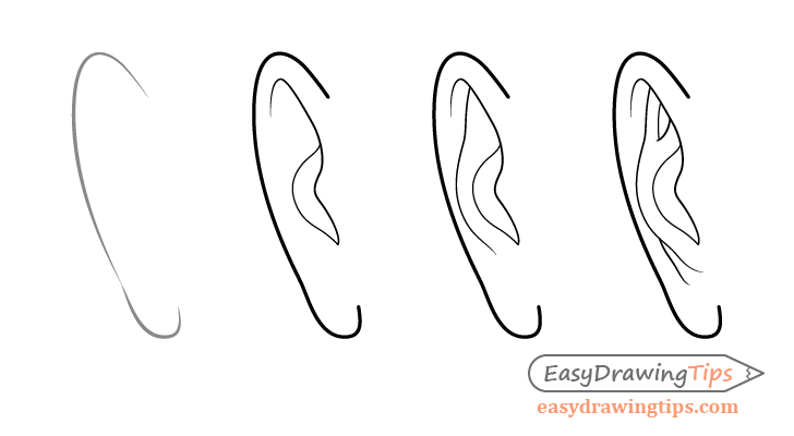 Male ear front view drawing step by step
