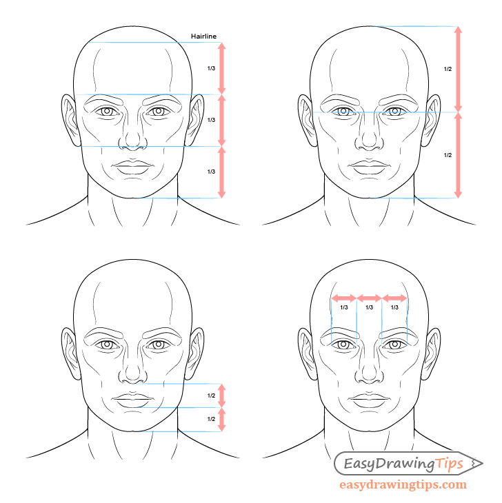 Male face drawing proportions
