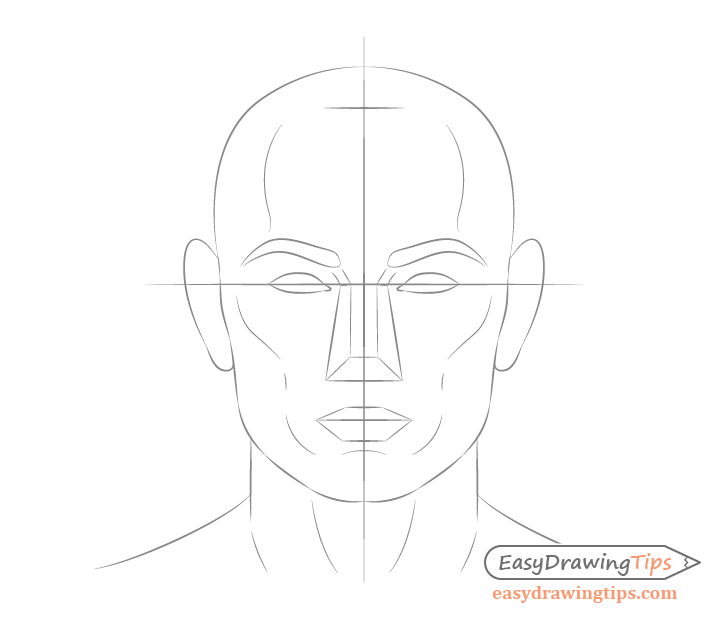 Male facial structure drawing