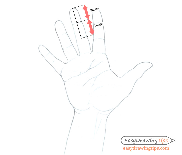 Hand drawing finger proportions