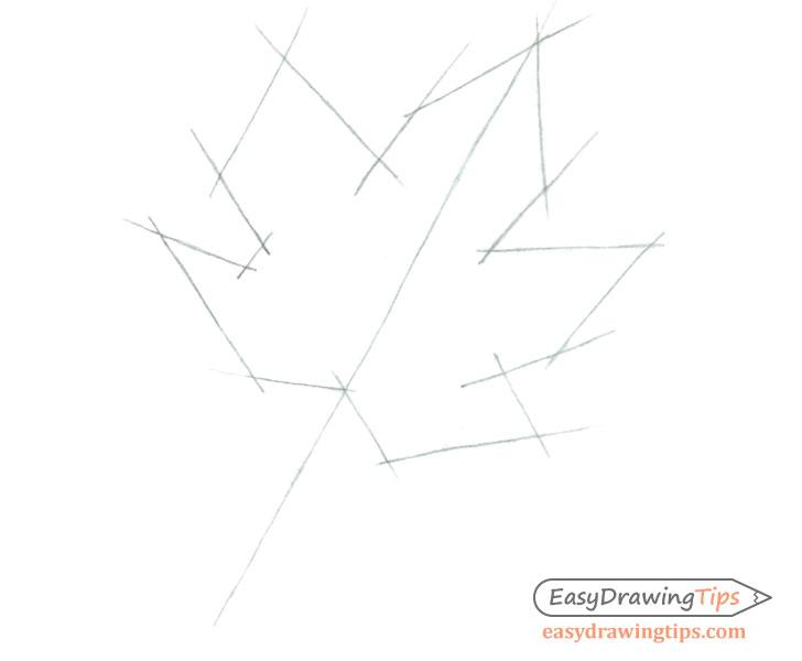 Maple leaf shape sketch