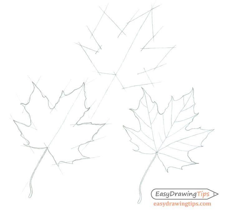 Maple leaf step by step drawing