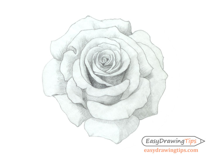 Rose drawing basic shading