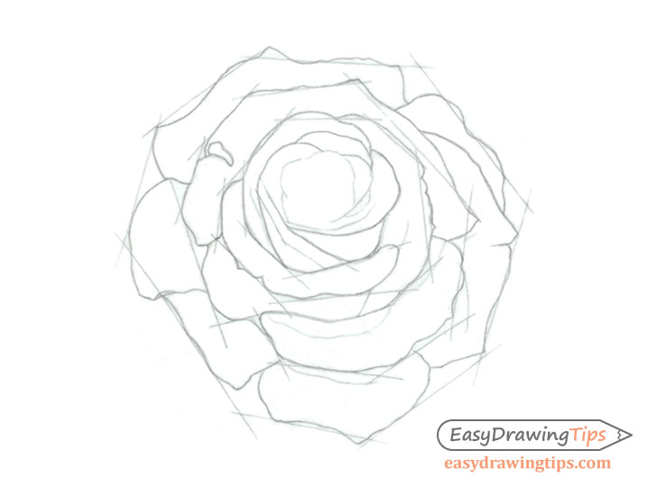 Rose core shape drawing