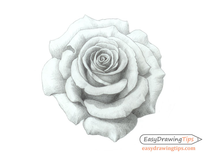 Rose pencil shaded drawing