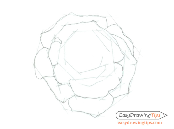 Rose inner petals drawing