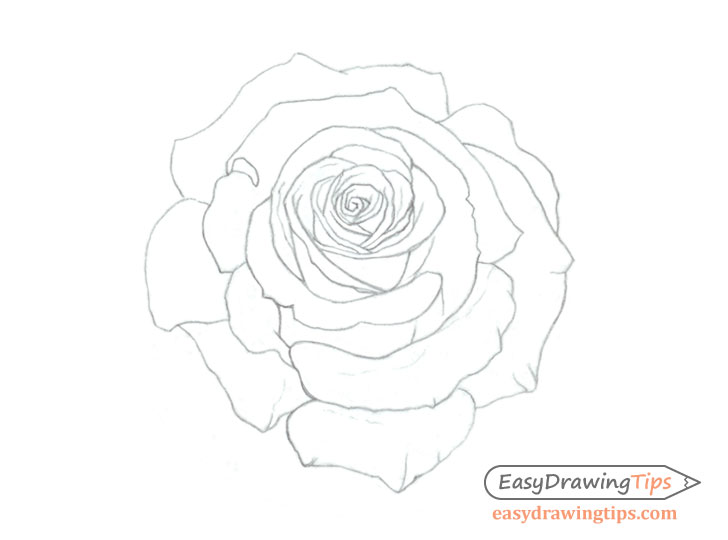 083585018 How to Draw a Rose Step by Step Tutorial - EasyDrawingTips