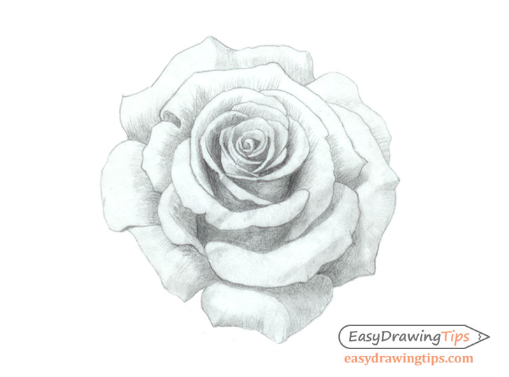 Rose drawing refined shading