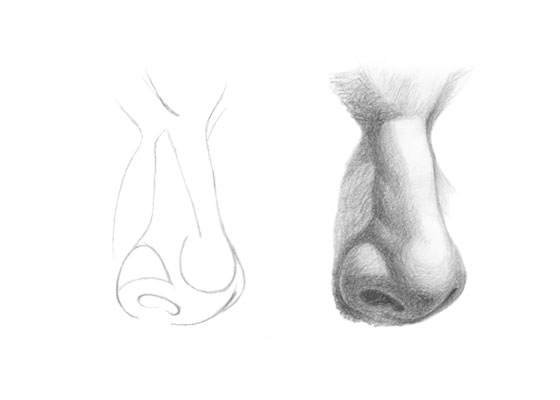 Nose drawing