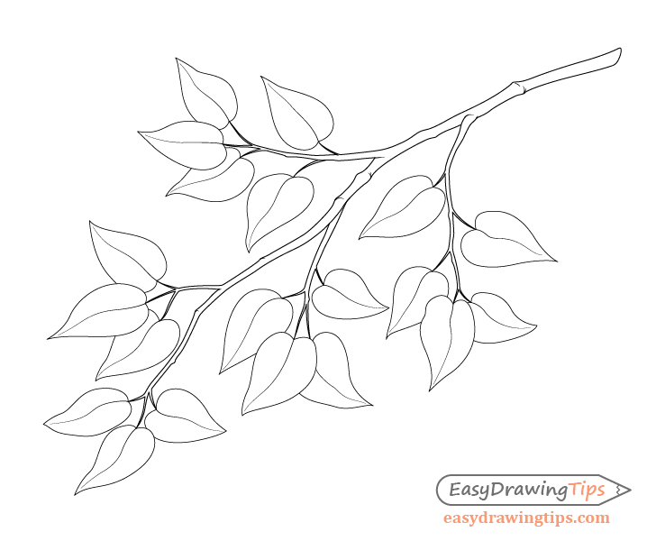 How to Draw a Tree Branch With Leaves - EasyDrawingTips