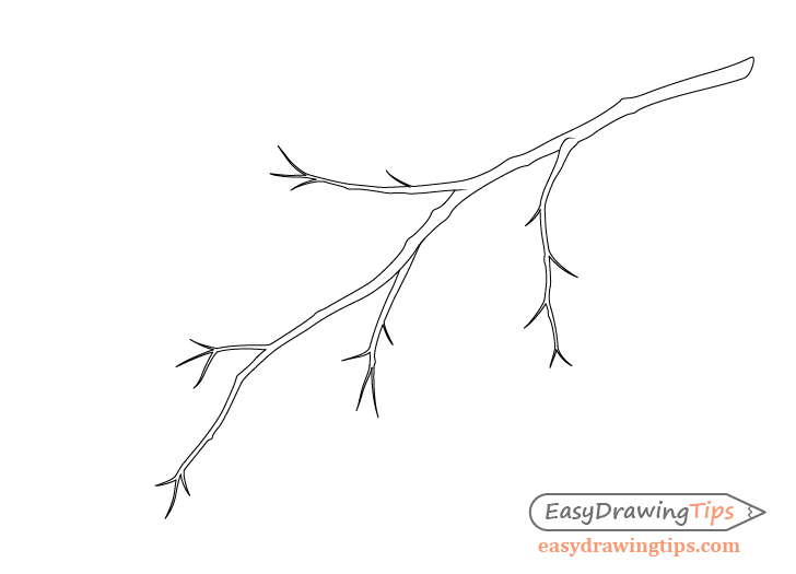 Branch with petioles drawing