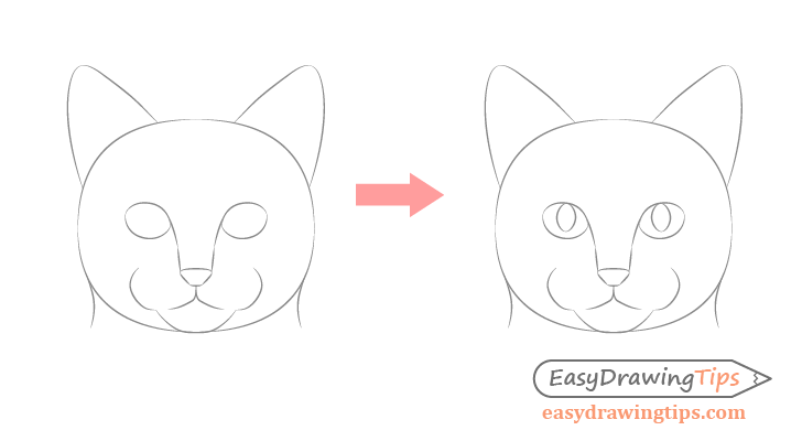 Drawing stages cat