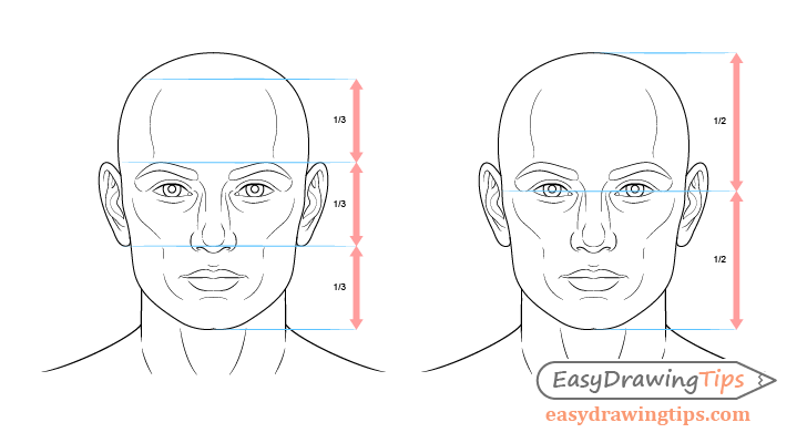 Face drawing proportions example