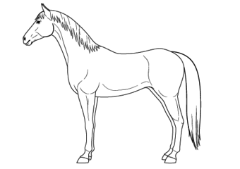 How to Draw a Horse From the Side View Tutorial