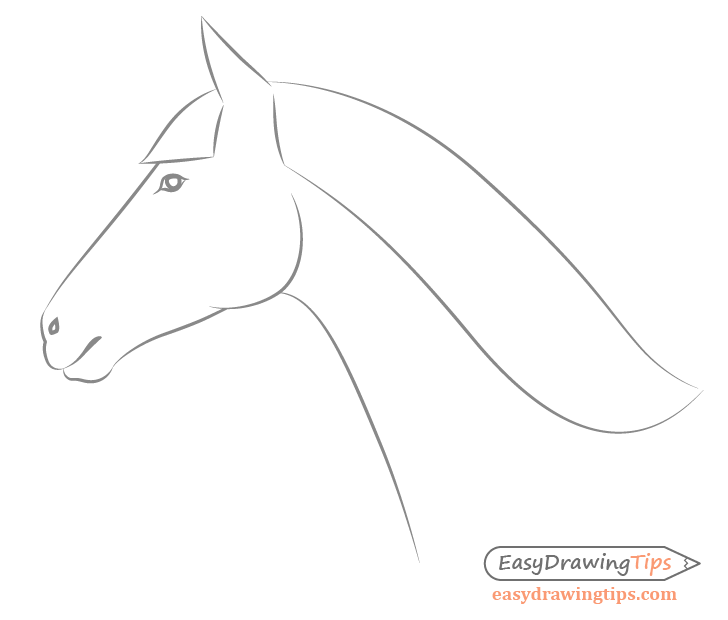 Horse facial features side view close up drawing