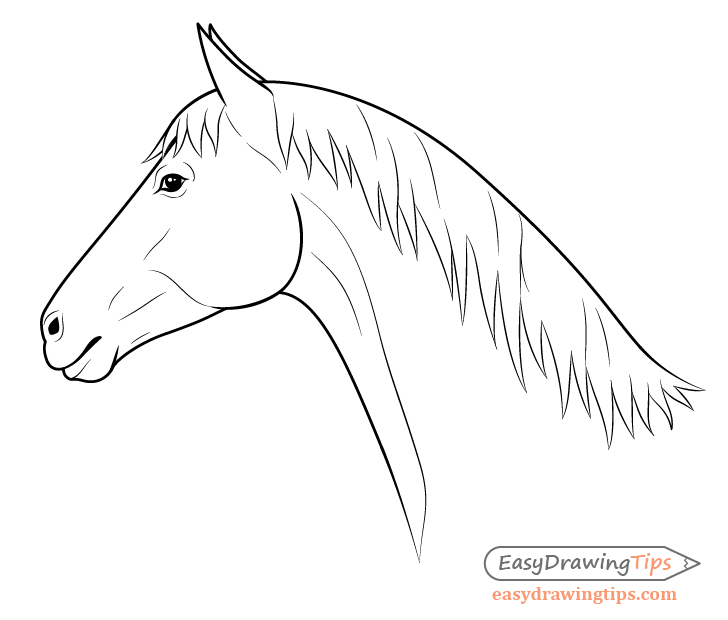 Horse head side view drawing