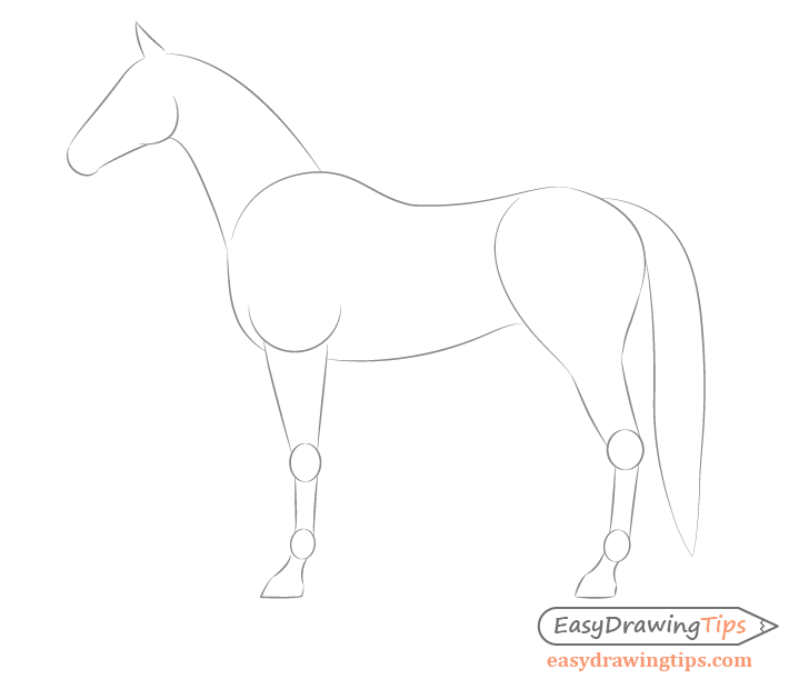 Horse side view body proportions drawing