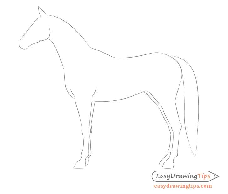 Horse side view body shape drawing