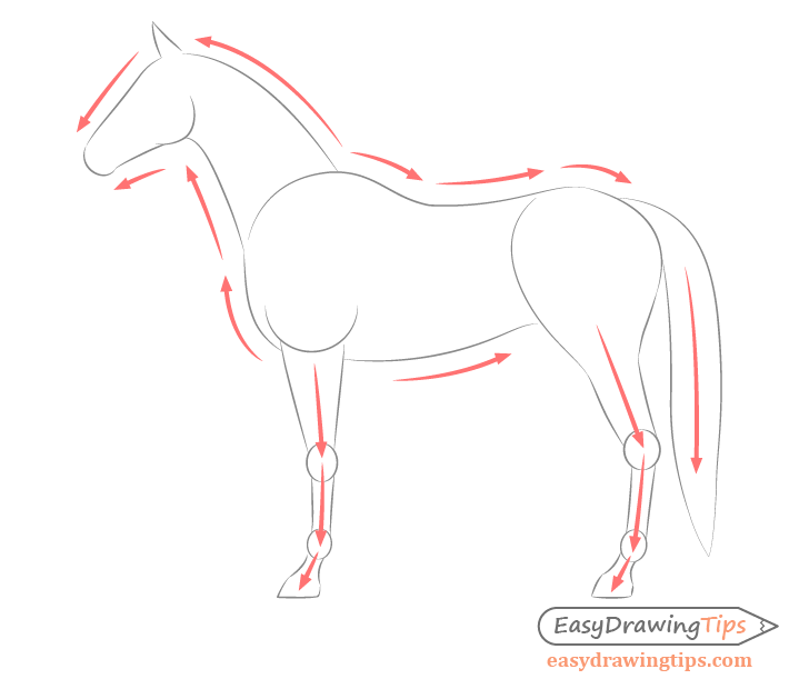 Horse side view body shape drawing directions