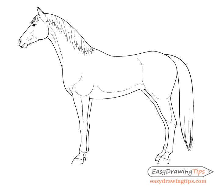 Horse side view drawing