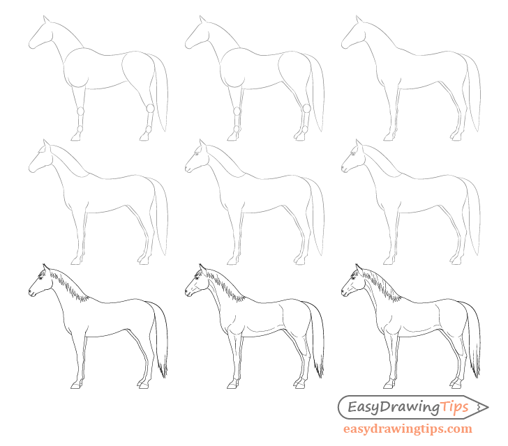 Horse side view drawing step by step