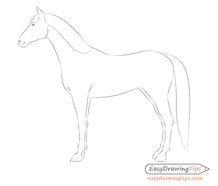 Horse side view facial features drawing
