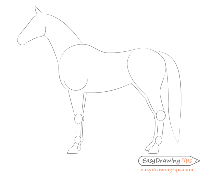 Horse side view far side drawing