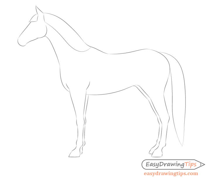 Horse side view mane shape drawing