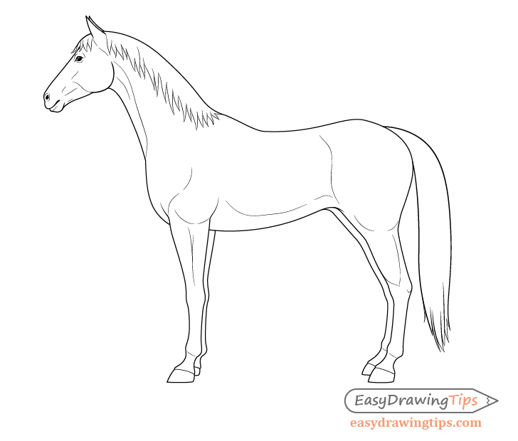 Horse side view muscles drawing