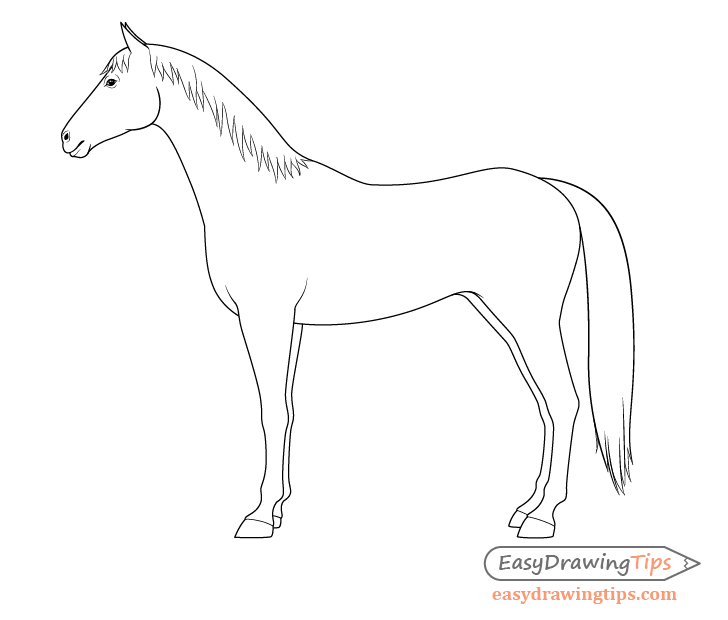 Horse side view outline drawing