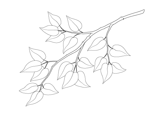 Leaf branch drawing