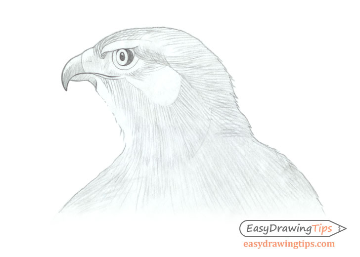 Hawk head basic shading