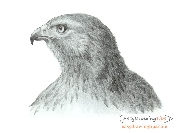 Hawk head drawing side view