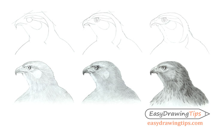Hawk head drawing step by step side view